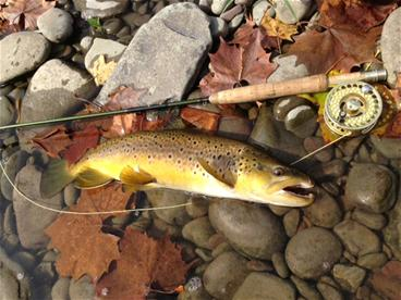Brodhead Brown PBS_thumb