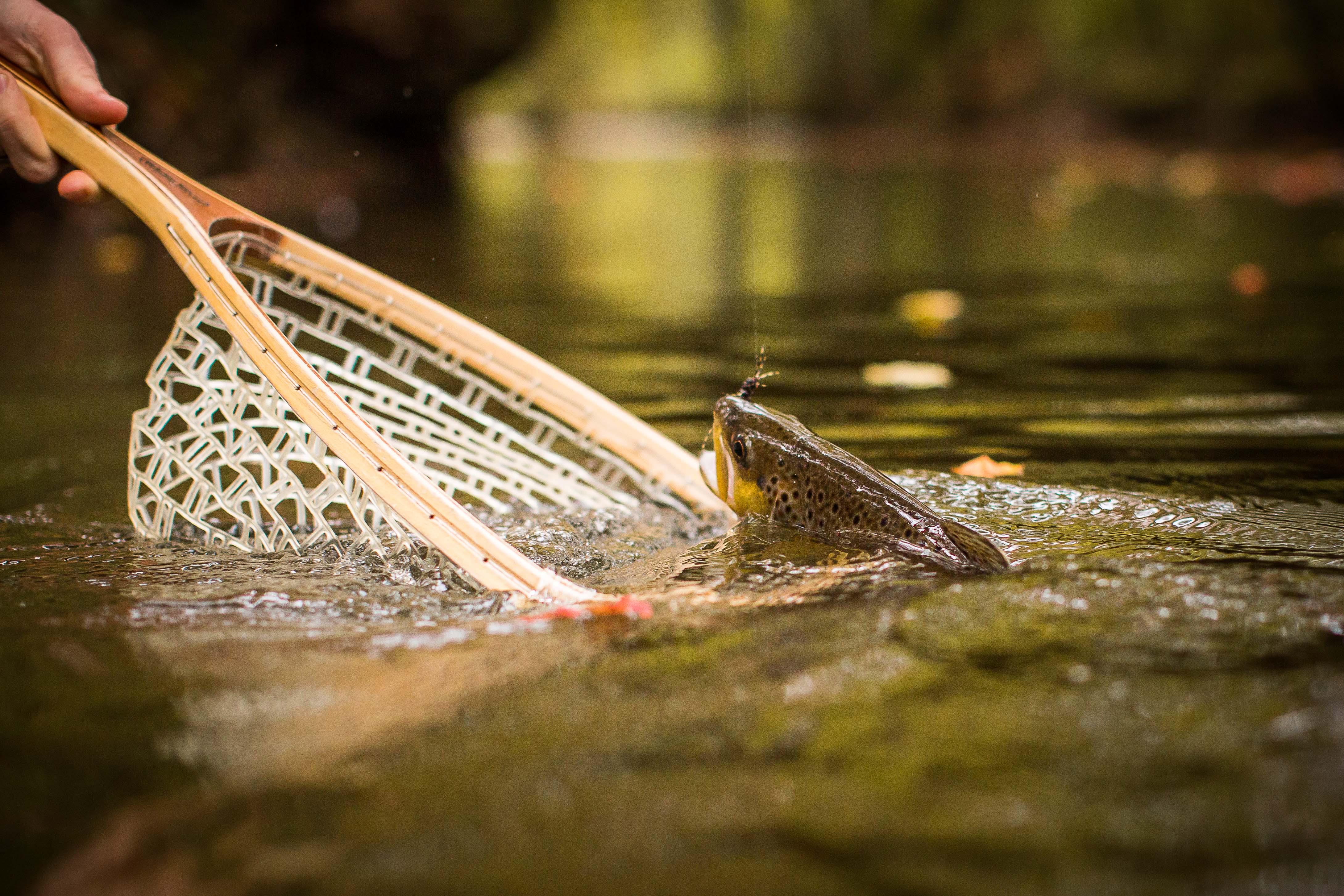 Orvis fishing reports ben turpin custom rod building for Orvis fishing report